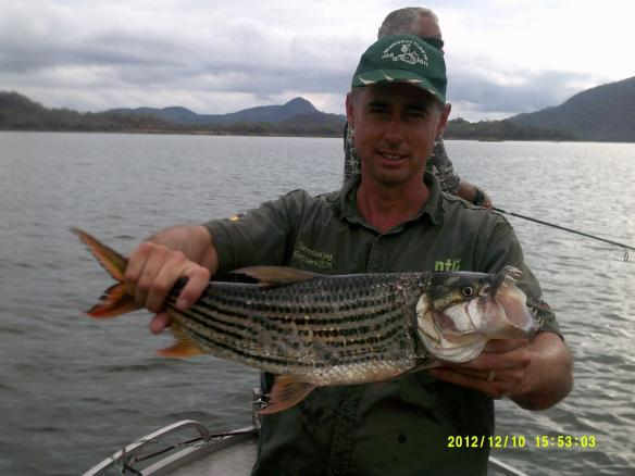 Tiger fishing on Cohora Basa