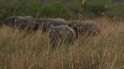 close up elephants grazing
