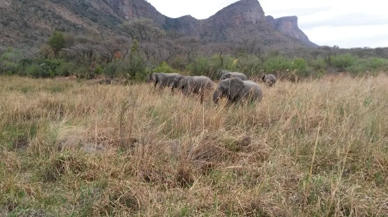 Elephants with mountain