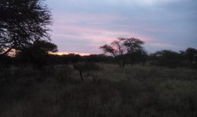 Sunset after last rain